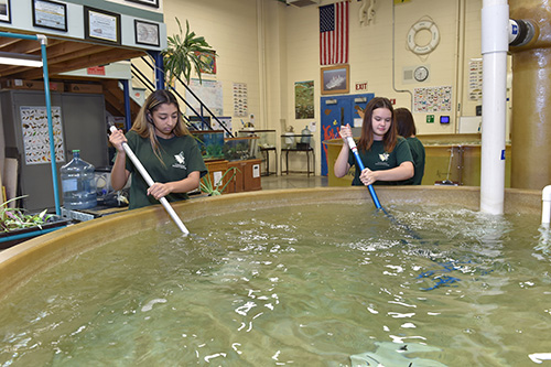 Wide shot of two environmental girls cleaning out the large fish tank in