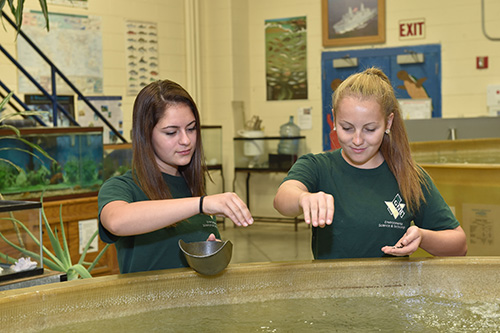 Mid shot of two environmental girls feeding the fish in the large fish tank in the shop