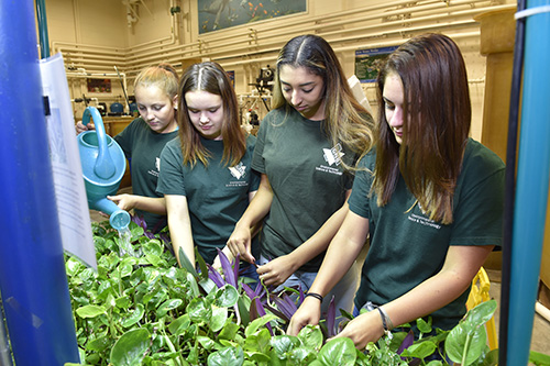 Four environmental girls caring for and watering plants