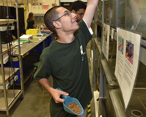 an Environmental student feeding fish in smaller tanks in the shop