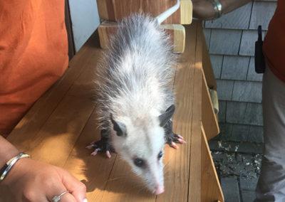 Charlie's Nature Play Possum