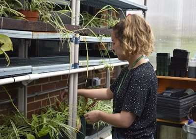 environmental student checking on plants