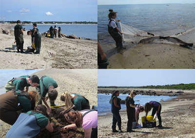 Environmental students in the sand